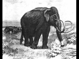 1899mammoth_thumb.jpg